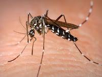 Penyebab, Gejala dan Pencegahan Penyakit Malaria
