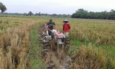 Koptu Supriadi Ikut Serta Dampingi Petani Mengolah Lahan Sawah di Desa Pasar Lapan