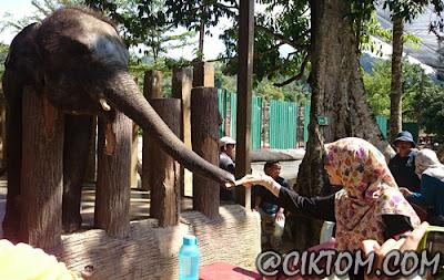 Zai excited kasi gajah makan tebu