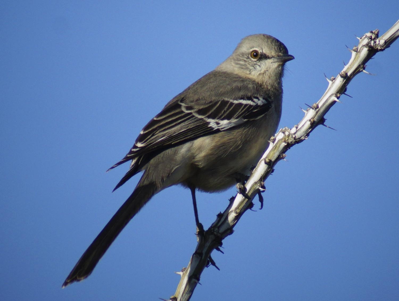 Butler S Birds Early Birds