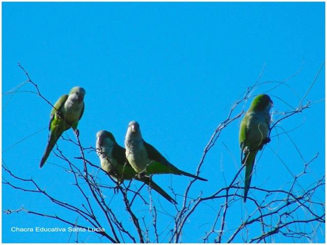 Loras en las ramas de un árbol - Chacra Educativa Santa Lucía