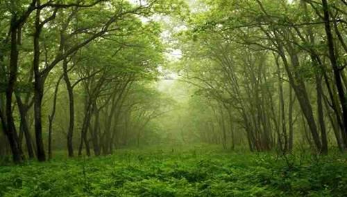 13 Sumber Daya Alam yang Dapat Diperbaharui Beserta Manfaatnya