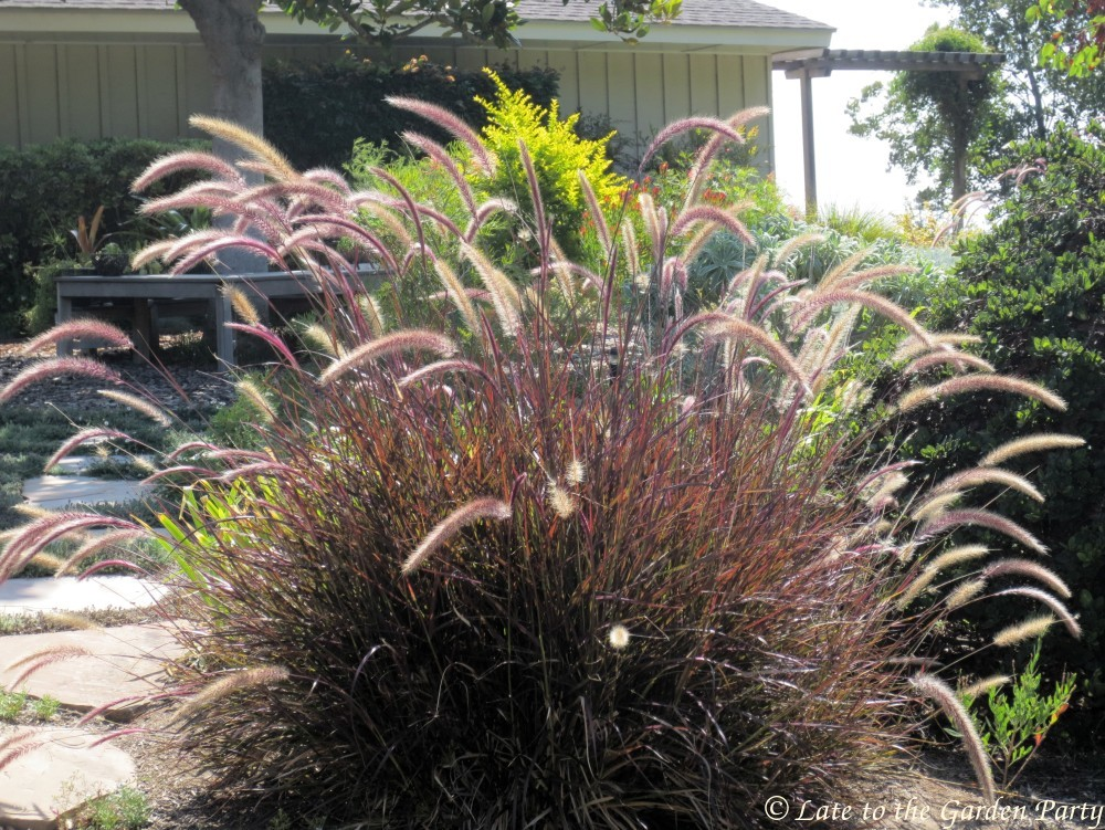 Late to the garden party bloom day and a bouquet august for Ornamental grasses that bloom