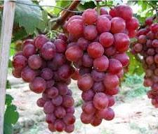 Tukang taman surabaya | taman buah