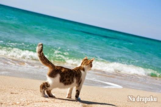 Dlaczego koty boją się wody?