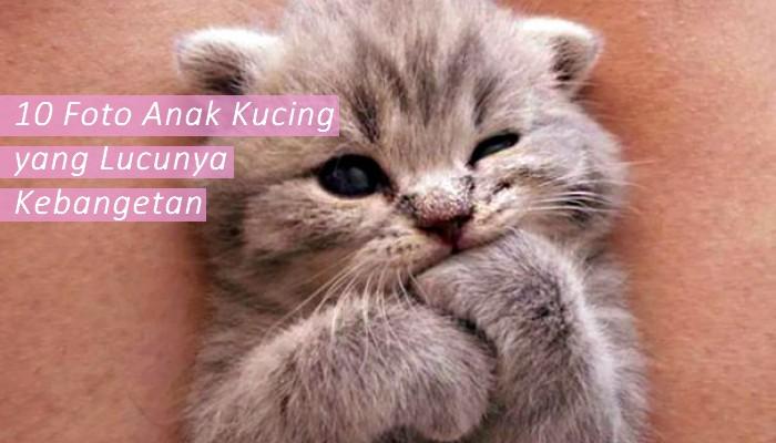 10 Foto Anak Kucing yang Imut dan Lucu