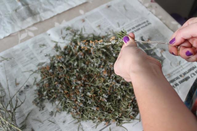 Separando las hojas y flores de las ramas de romero para preparar aceite de romero casero