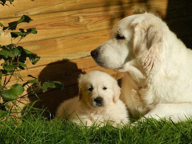 Signs Your Dog Could Be Pregnant