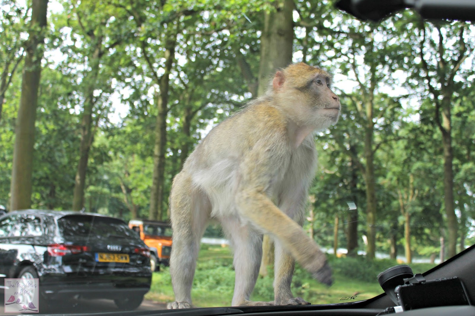 Calypso Holiday Hacks Campaign - monkey on the car
