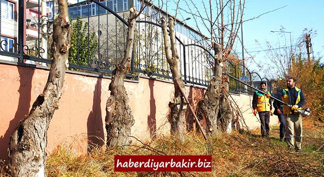 Diyarbakır'da ağaç budama çalışmaları sürüyor