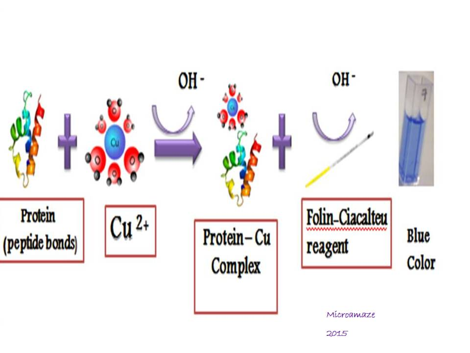 Estimation of protein concentration