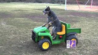 anjing naik Mobil Pribadi
