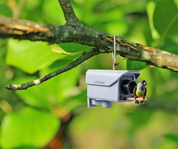 Security Camera Bird Feeder