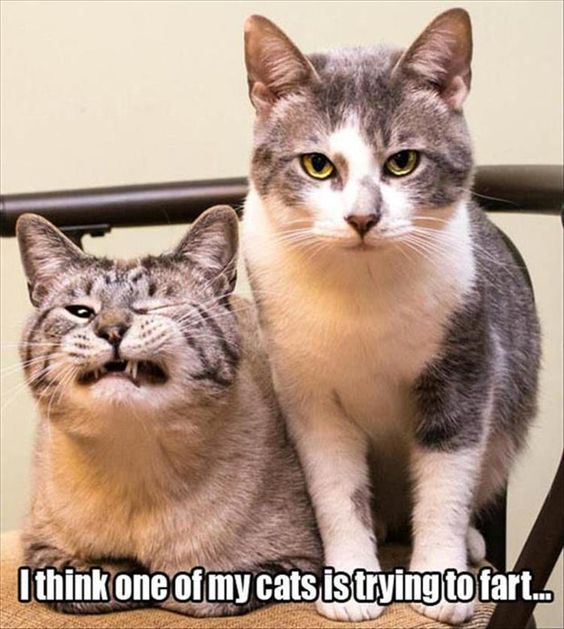 Funny Farting Cat Joke Meme Picture