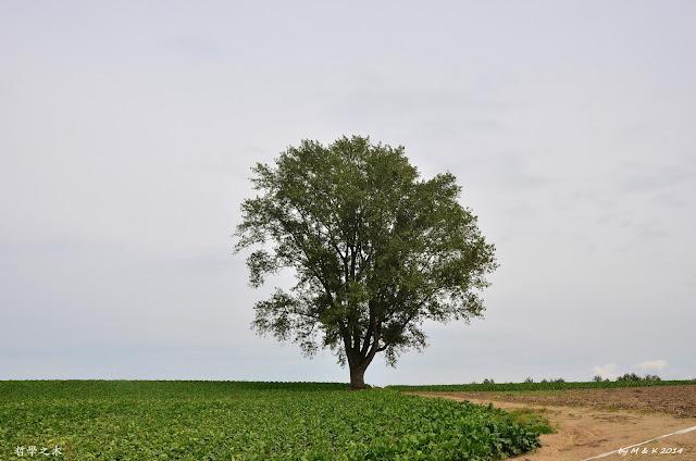 Day 10.4 哲學の木、千代田の丘、三愛の丘、新栄の丘