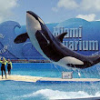 Rumor Alert- Parques Reunidos may buy Miami Seaquarium