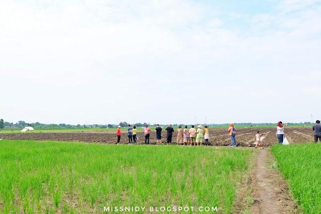 wisata menanam bawang di brebes