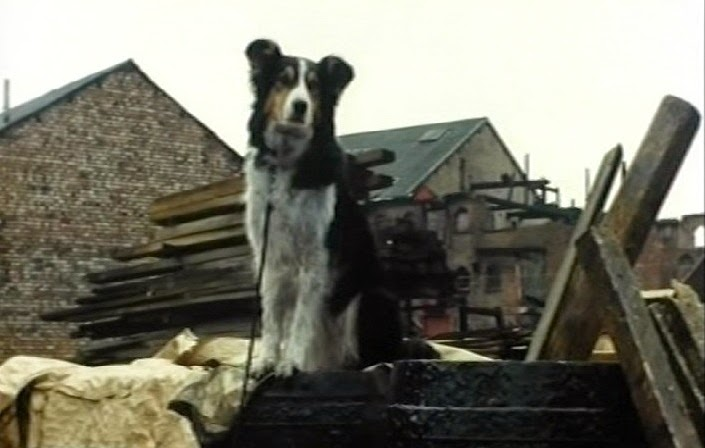 Toby the dog from The Sign of Four starring Jeremy Brett