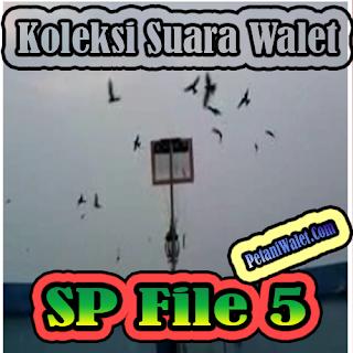 Suara Walet Panggil File 5