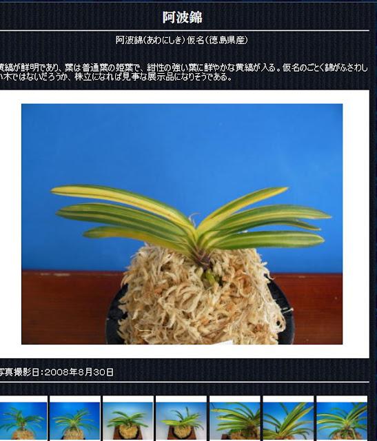 http://www.fuuran.jp/jiman_awanisiki.html#%E9%98%BF%E6%B3%A2%E9%8C%A6%E3%81%AE%E8%A9%B3%E7%B4%B0