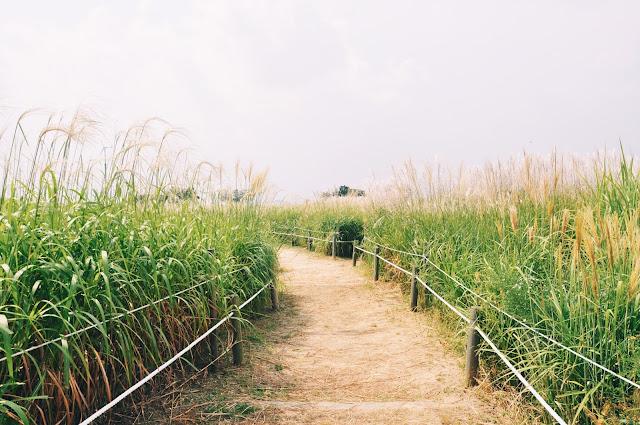Haneul Park 하늘공원