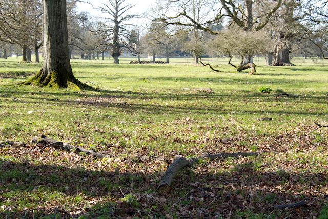 Cornbury Park