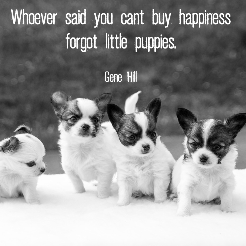 "Four small puppies with quote ""Whoever said you can't buy happiness forgot little puppies."" - Gene Hill"