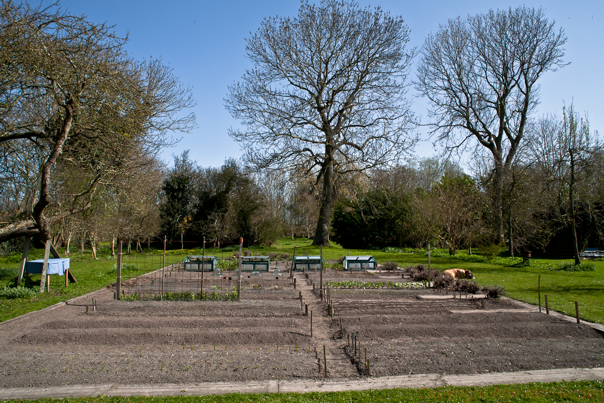 3 Kuub Zand Camhof Comments: Moestuin In April