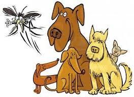 Phòng chống Muỗi Tấn Công Thú Cưng