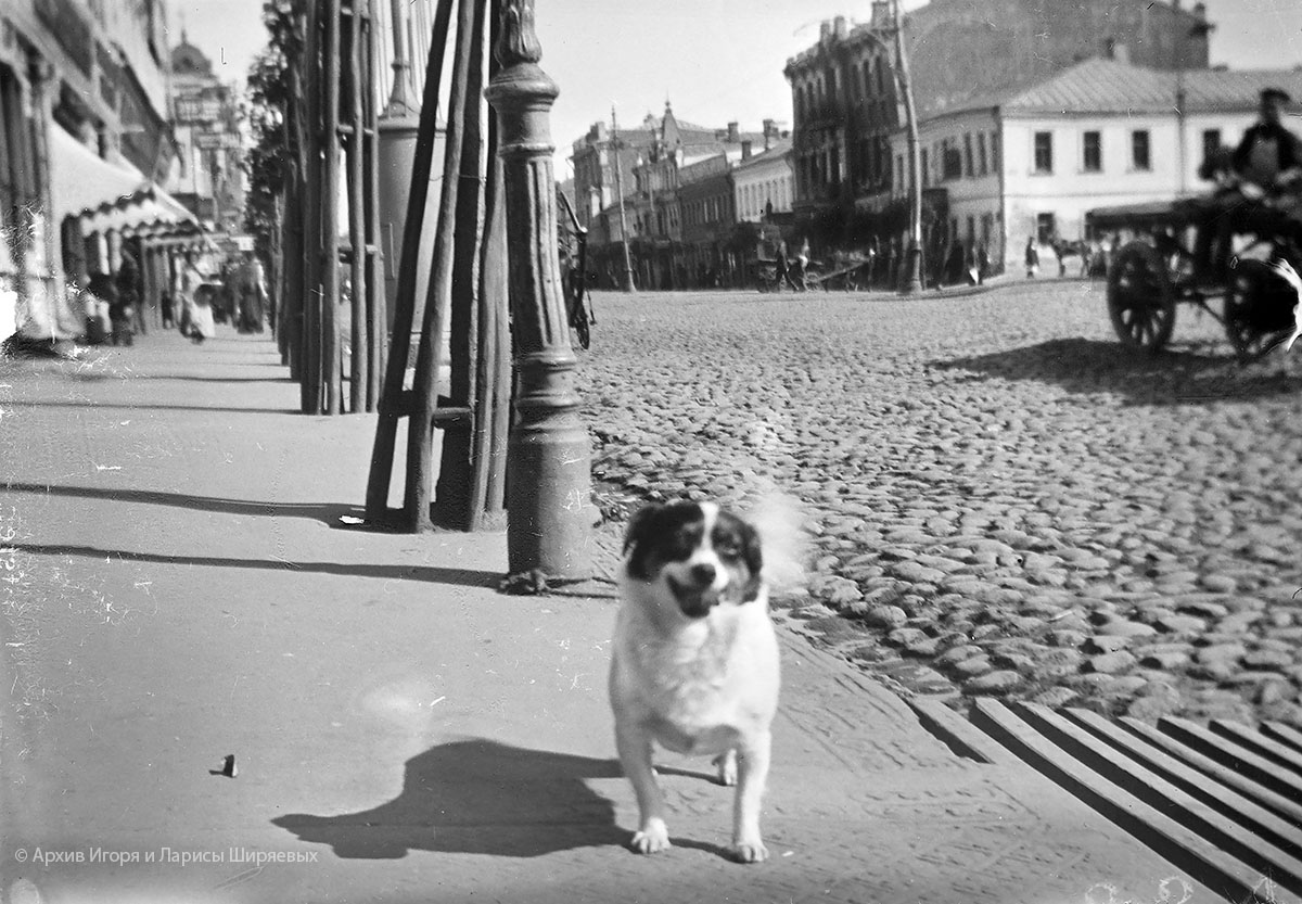 Старое фото Крыма. Собака