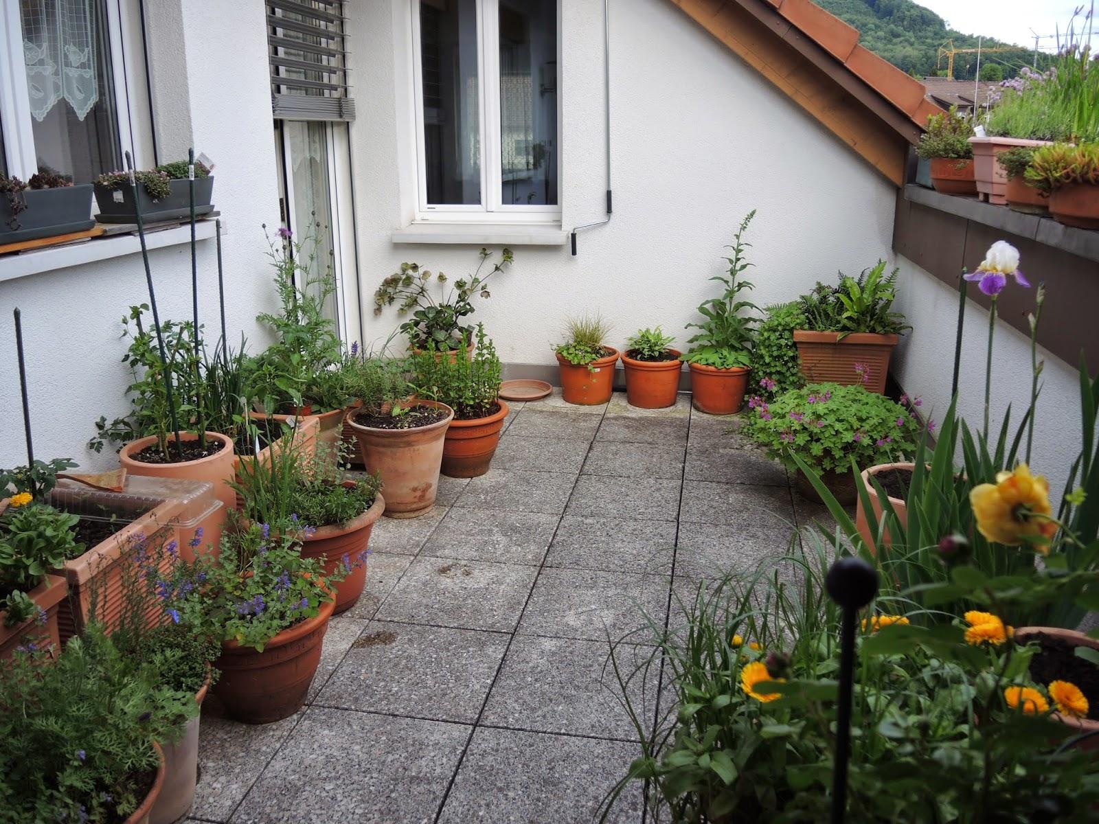 netzwerk balkongarten fragen zu meinem balkon aus dem fricktal. Black Bedroom Furniture Sets. Home Design Ideas