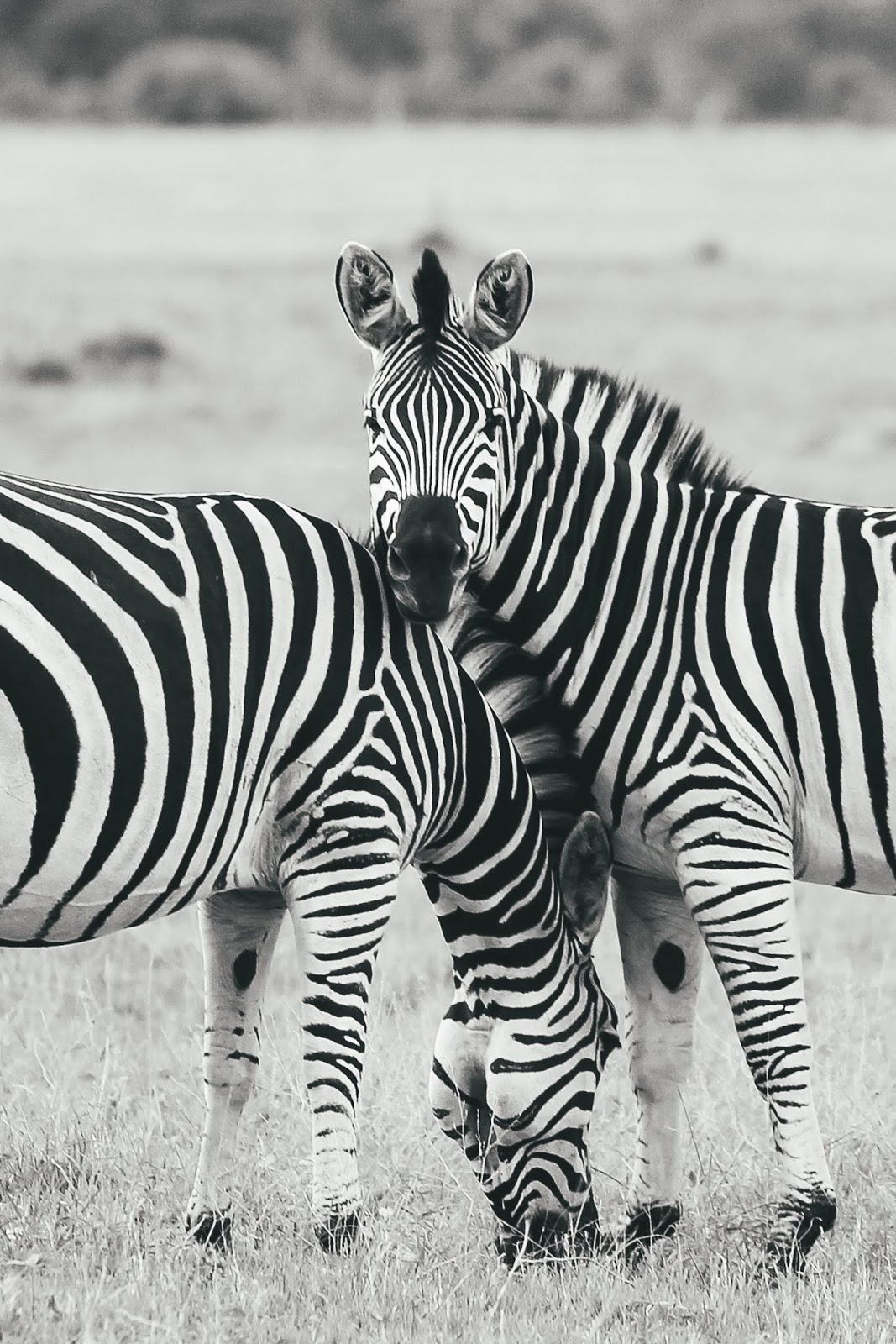 Photo Dairy: Africa in Black and White