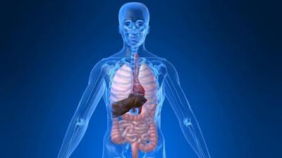 Tips-untuk-mengeluarkan-racun-dari-dalam-tubuh-dengan-chlorophyllin-asli-nasa