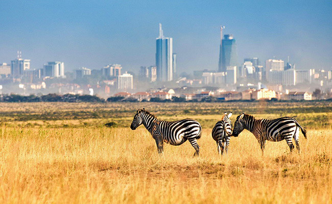 Xvlor.com Nairobi National Park is protected wildlife among the skyscrapers