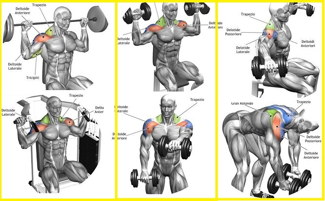 Top 5 Shoulder Exercises for Cannon Ball Delts - all