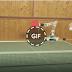 Ping Pong Robot Arm.