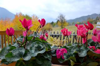 pianta giardino montagna aiuola