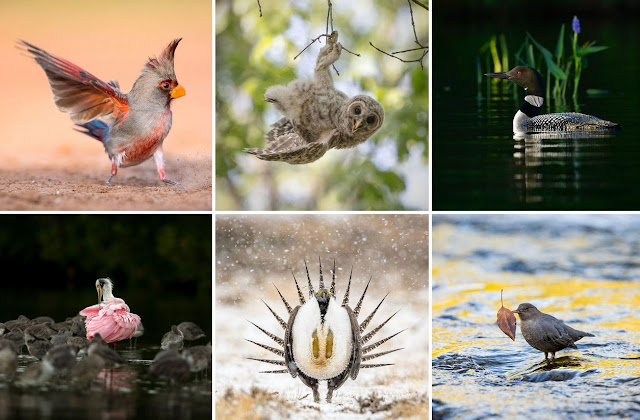 https://www.audubon.org/magazine/summer-2018/the-2018-audubon-photography-awards-top-100https://www.audubon.org/magazine/summer-2018/the-2018-audubon-photography-awards-top-100