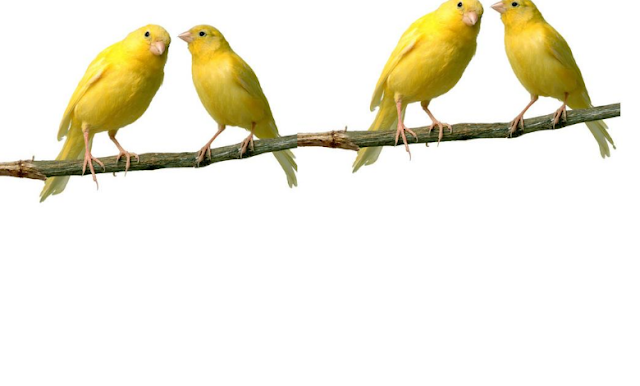 Kisah Pencarian Kekuasaan Allah Oleh Nabi Ibrahim Melalui Empat Burung