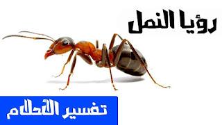 تفسير حلم القمل , تفسير رؤية النمل في المنام