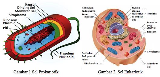 Lisa ariyanti google perbedaan sel prokariotik dan eukariotik ccuart Choice Image