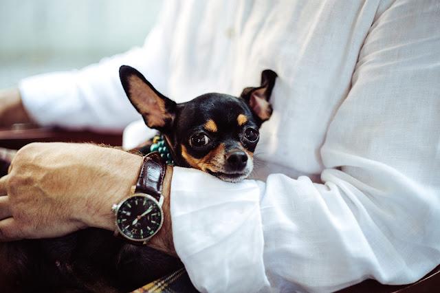 success goals dogs pets business happiness joy love money