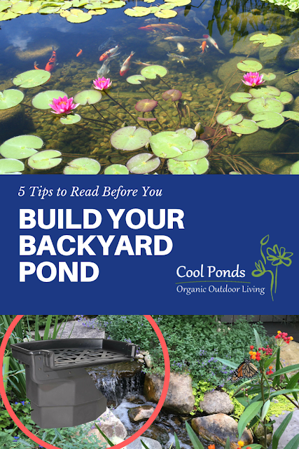 5 tips to consider before building your backyard pond