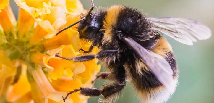 Kawanan Lebah Ganas Menyerang Klaten, 7 Orang Tewas