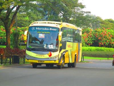 Ayo Naik Bus