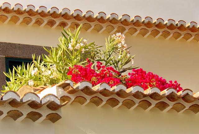 flores no telhado que encantam