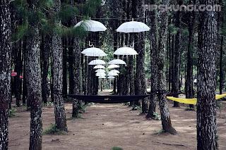 wisata rumah pohon sragi banyuwangi