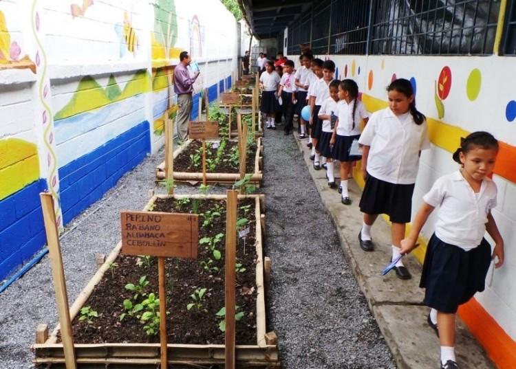 Cómo Cuidar el Medio Ambiente en la Escuela