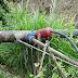Pérdidas de agua no contabilizadas por OSE responde a conexiones clandestinas