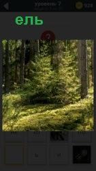 В лесу под большими деревьями растет маленькая ель, находясь в тени